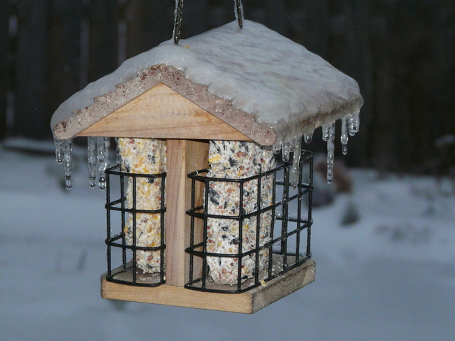 A little ice on the suet feeder roof Amherstburg, Ontario Canada