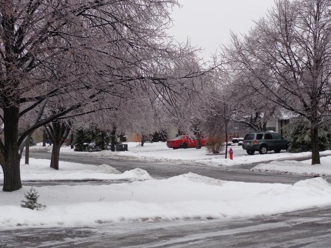 icy trees Brampton, Ontario Canada