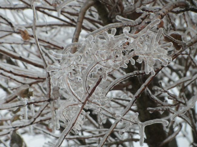Coated In Ice
