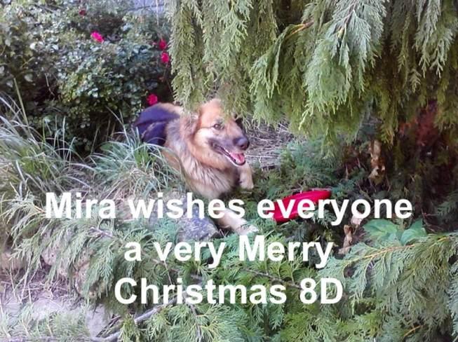 christmas wish Chatham-Kent, Ontario Canada