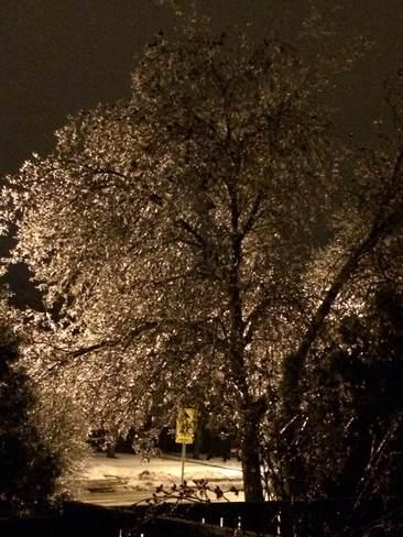 ice tree Hamilton, Ontario Canada