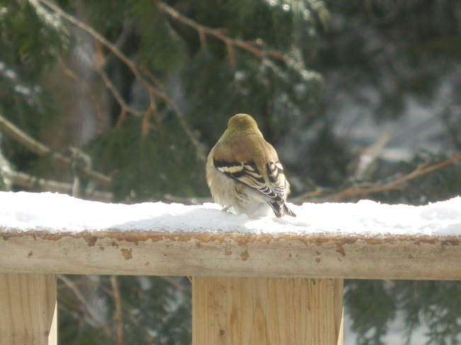 Finch Meaford, Ontario Canada