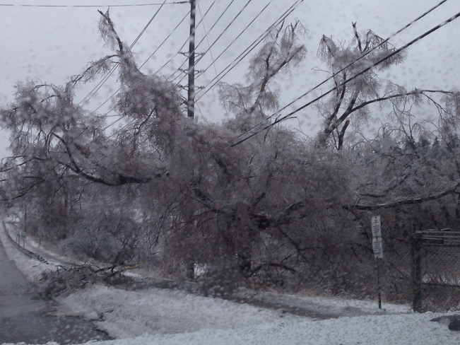 trees down from ice storm Markham, Ontario Canada