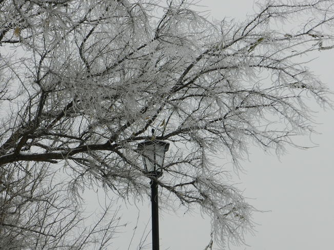 Icy Tree Barrie, Ontario Canada