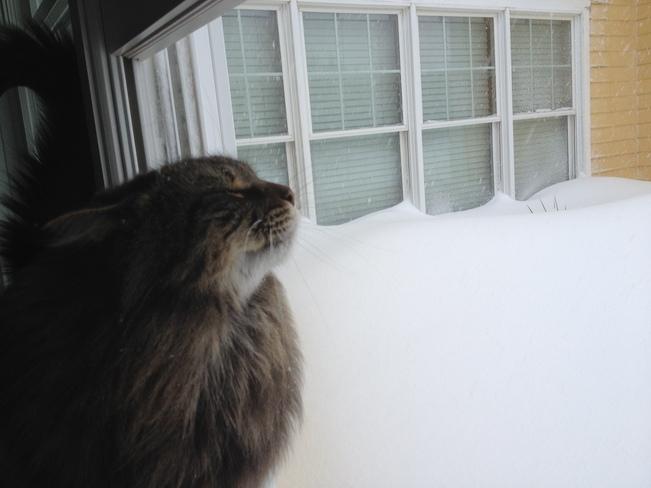 Mikey loving the winter air Summerside, Prince Edward Island Canada