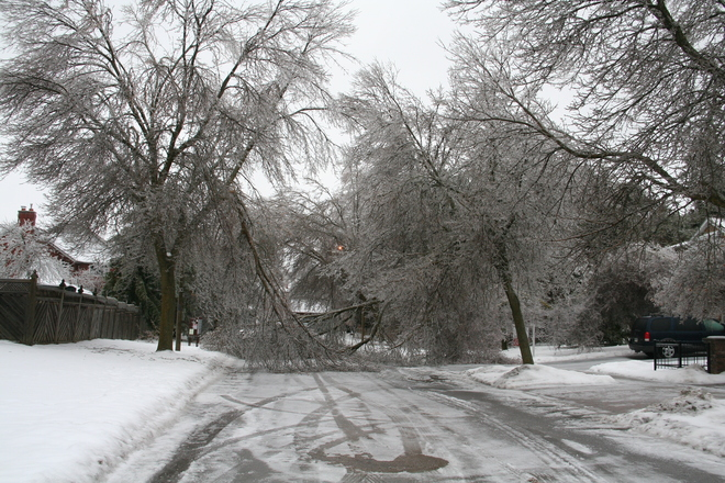 Trees down- road impassible Whitby, Ontario Canada