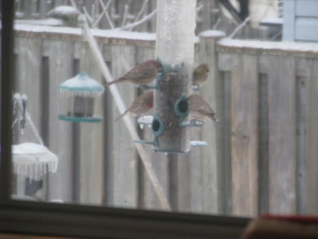 Ice Storm Trenton, Ontario Canada