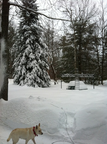 The snow still keeps coming Fitzroy Harbour, Ontario Canada