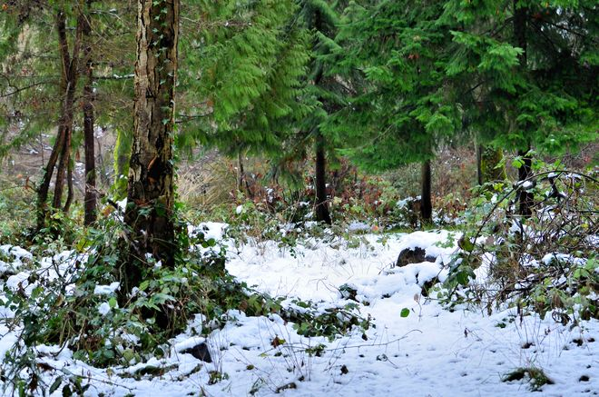Winter in the Woods Vancouver, British Columbia Canada