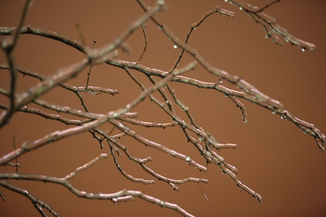 Ice Covered Tree Branches Milton, Ontario Canada