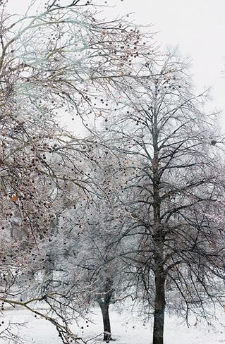 Ice Storm 8 Toronto, Ontario Canada