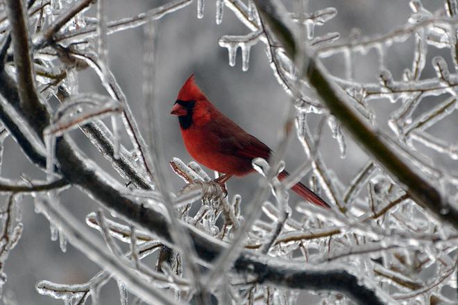 Ice Storm Beauty Hamilton, Ontario Canada