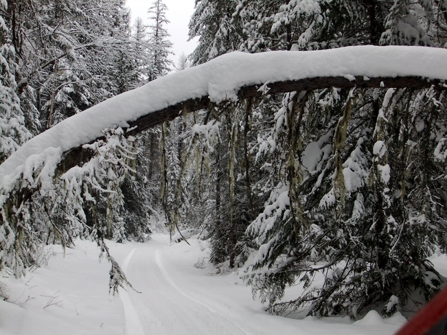 tree arch on snowy road Fauquier, British Columbia Canada