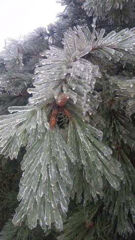 Mother Nature's Art Work Oshawa, Ontario Canada