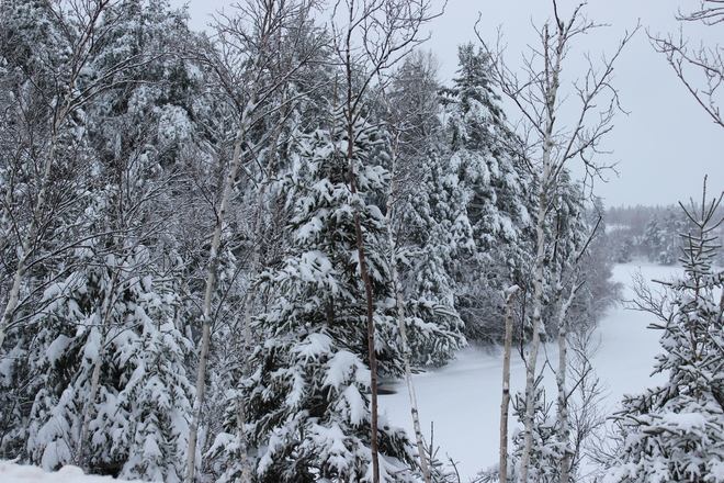 snow on the trees Richibucto, New Brunswick Canada