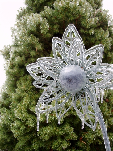 Icy Metal Flower Cambridge, Ontario Canada