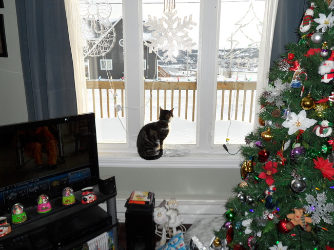 Kaci (the cat) looking out at all the snow Carbonear, Newfoundland and Labrador Canada