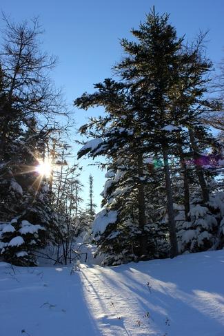 Winter Wonderland Conception Bay South, Newfoundland and Labrador Canada