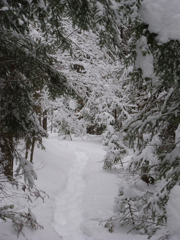Haliburton Snowshoe Trails Haliburton, Ontario Canada