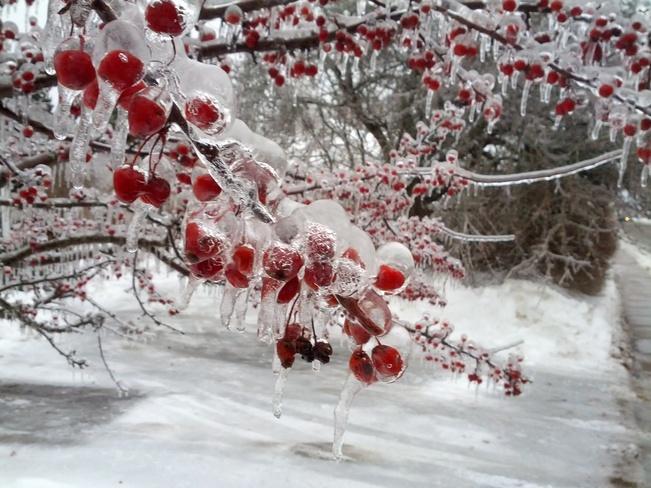 Ice Berries Saint Andrews, New Brunswick Canada