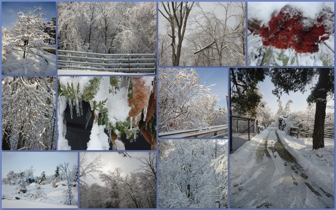 AT THE ZOO SNOW COLLAGE Toronto, Ontario Canada