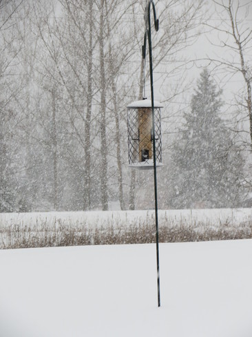 Too Snowy! Even for the birds Lindsay, Ontario Canada