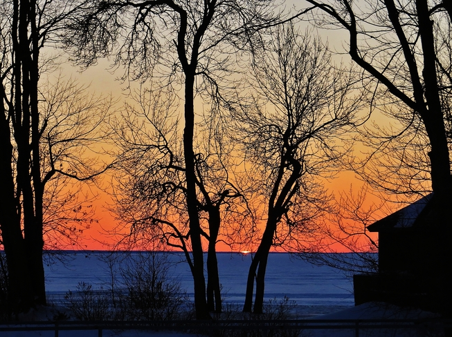 Trees at sunset stir the imagination. North Bay, Ontario Canada