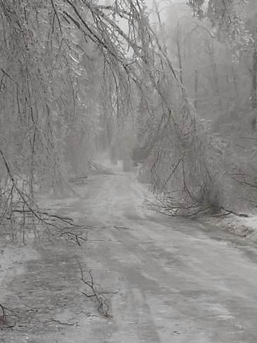 Ice storm 2013 Halton Hills, Ontario Canada
