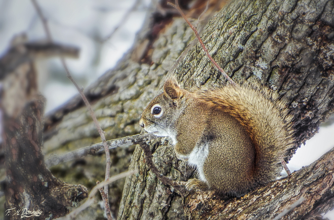 Squirrel enjoying yesterdays warm weather Smiths Falls, Ontario Canada