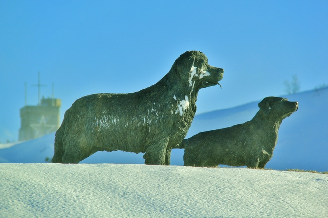 Dogs of Winter. St. John's, Newfoundland and Labrador Canada