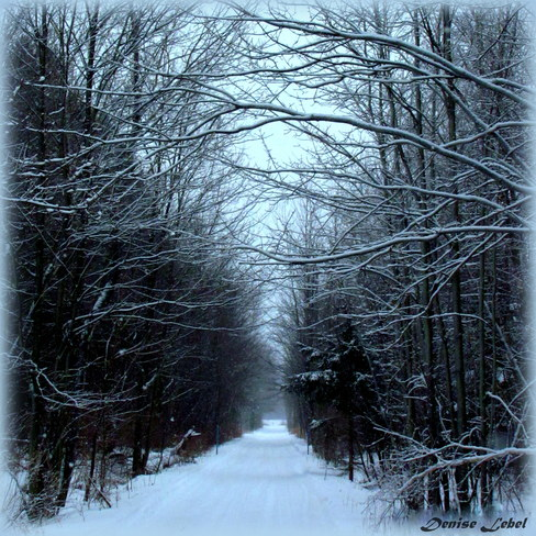 Paysage d'hiver-sentier Drummondville, Quebec Canada