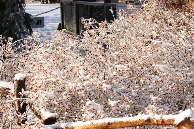 Icy December Toronto, Ontario Canada