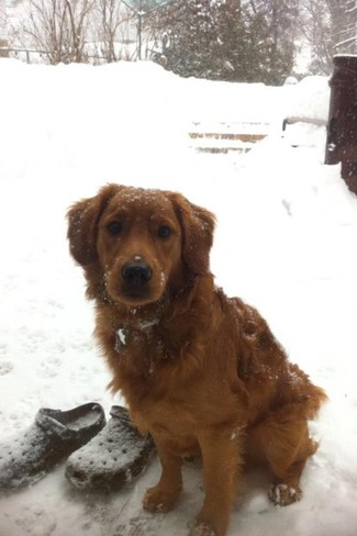 Marvin loves the snow Brockville, Ontario Canada