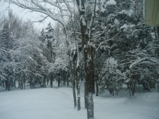 Snow, snow and more snow. Moncton, New Brunswick Canada