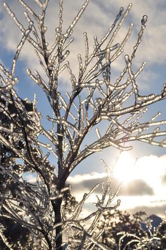 Ice Princess Kingston, Ontario Canada