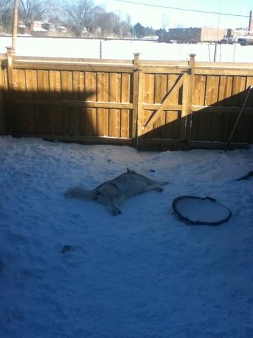 dog loves cold Centennial Scarborough, Ontario Canada