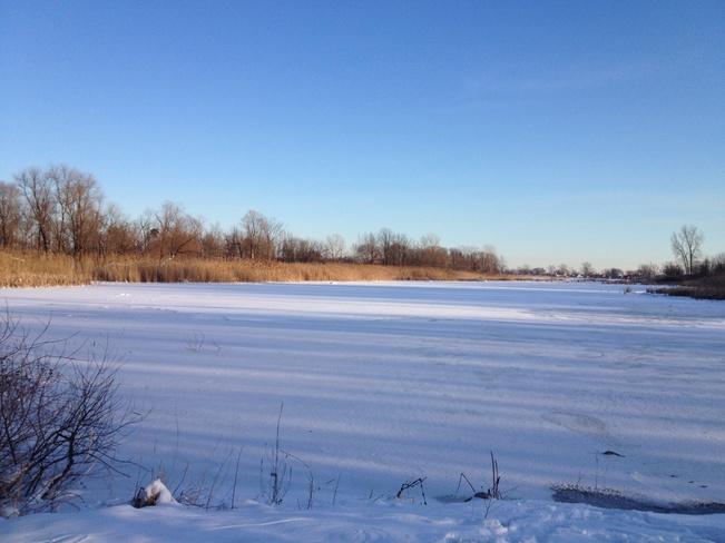 Frozen Amherstburg, Ontario Canada