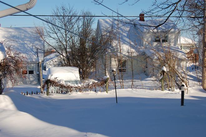 Garden in Winter .... Moncton, New Brunswick Canada