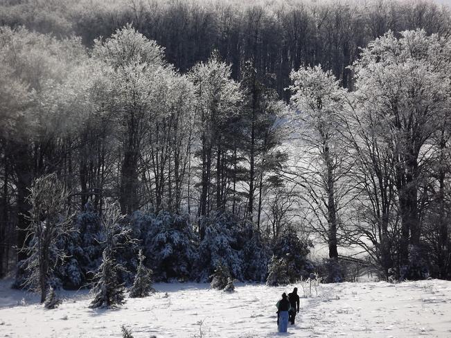 Shimmering trees Orangeville, Ontario Canada