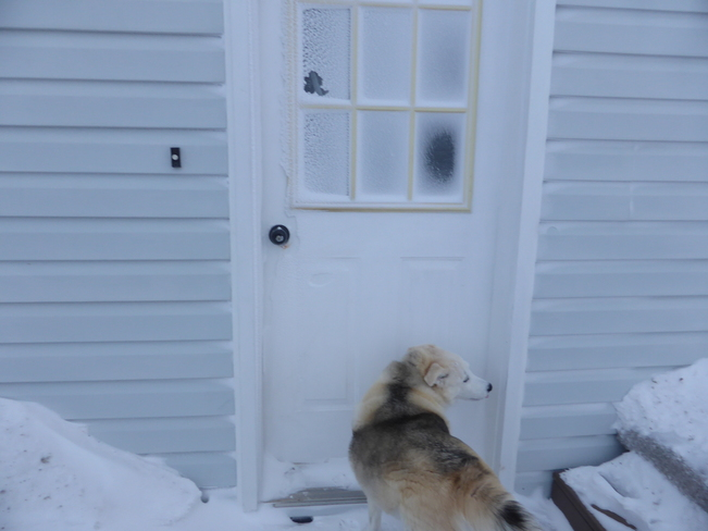 Let Me In, Its Cold!! Birchy Bay, Newfoundland and Labrador Canada