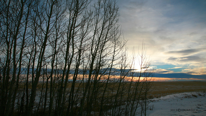 Sunrise, Branches and Clouds High River, Alberta Canada