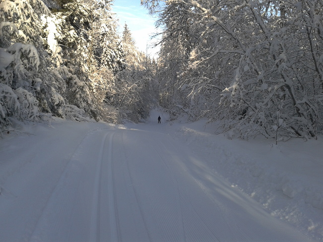 Cross Contry Skiing Quesnel, British Columbia Canada