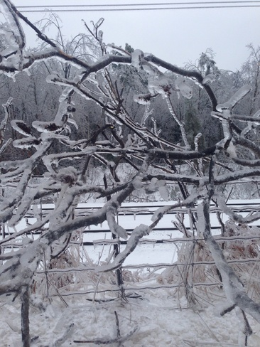 Day after ice storm Milton, Ontario Canada