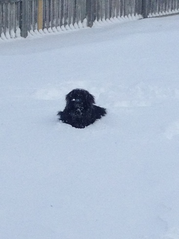 At least someone likes snow!!!! Alma, Ontario Canada