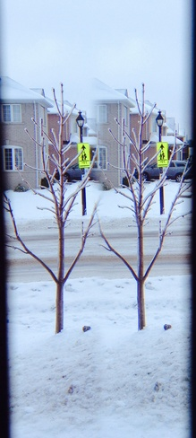 ice covered trees Newmarket, Ontario Canada