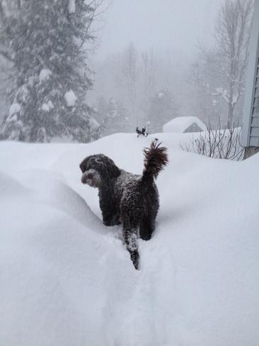 more snow! Seguin, Ontario Canada