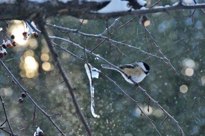 Surviving in snow, wind, cold Erin, Ontario Canada