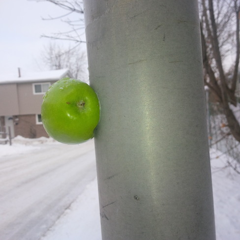 Cold enough to stick an apple to a pole Waterloo, Ontario Canada