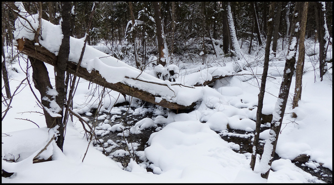 Sheriff Creek, along the red trail. Elliot Lake, Ontario Canada
