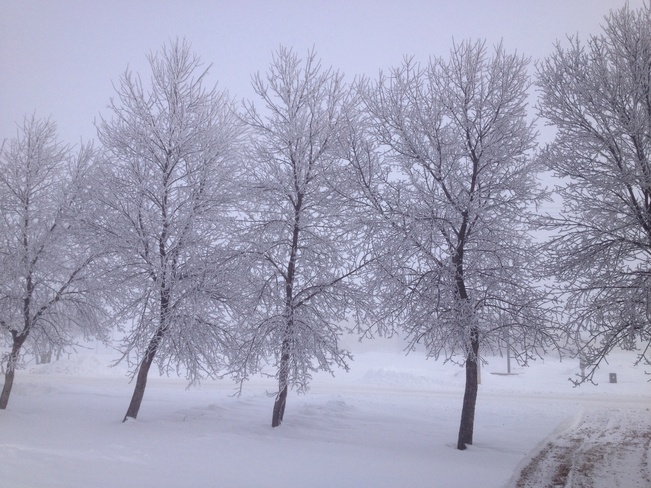 frost covered trees Erickson, Manitoba Canada